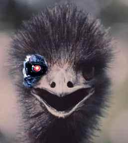 The Emunator